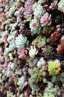 Bildno.: 11405045<br/><b>Feature: 11405009 - Urban Gardeners</b><br/>San Francisco nursery specializes in cacti and bromeliads<br />living4media / Bayle Doetch