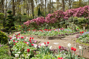 Bildno.: 11428707<br/><b>Feature: 11428706 - Tulip Time</b><br/>Spring garden in The Netherlands<br />living4media / Pietrek, Sibylle