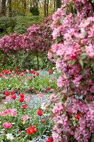 Bildno.: 11428723<br/><b>Feature: 11428706 - Tulip Time</b><br/>Spring garden in The Netherlands<br />living4media / Pietrek, Sibylle