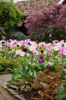 Bildno.: 11428733<br/><b>Feature: 11428706 - Tulip Time</b><br/>Spring garden in The Netherlands<br />living4media / Pietrek, Sibylle