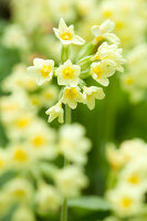 Bildno.: 11428737<br/><b>Feature: 11428706 - Tulip Time</b><br/>Spring garden in The Netherlands<br />living4media / Pietrek, Sibylle