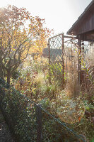 Bildno.: 11444465<br/><b>Feature: 11444463 - Green Love</b><br/>Making the most of an allotment plot in Cologne, Germany<br />living4media / Pietrek, Sibylle