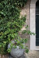 Bildno.: 11452043<br/><b>Feature: 11451948 - Lakeside Living</b><br/>Spectacular home on the western shore of Lake Garda, Italy<br />living4media / studiow&#228;lder