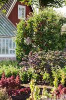 Bildno.: 11457467<br/><b>Feature: 11457439 - Sofiero Castle Garden</b><br/>Castle garden in Helsingborg, Sweden<br />living4media / Pietrek, Sibylle