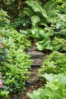 Bildnr.: 11501053<br/><b>Feature: 11501027 - Gr&#252;ne Oase in der Stadt</b><br/>Galeristin Elly liebt es in ihrem Garten zu lustwandeln und zu meditieren, Dresden<br />living4media / Krieg, Roland