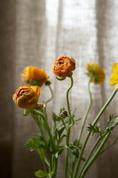 Bildnr.: 11962639<br/><b>Feature: 11962634 - Gl&#252;ckstreffer</b><br/>Offener Kamin, Holzdielen, lichtdurchflutet, mit Garten - in London. Ja, das gibt es.<br />living4media / Hogan, Sarah
