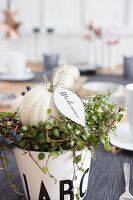 Bildno.: 11979195<br/><b>Feature: 11979179 - New Autumn Colours</b><br/>A new look for autumn decoration: a table in white<br />living4media / Algermissen, Astrid