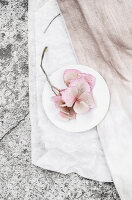 Immagine N°: 11988785<br/><b>Feature: 11988768 - Garden Inspiration</b><br/>Pastel flower shades reflected on D-I-Y dyed fabrics<br />living4media / Dimmich, Agata