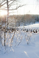 Bildno.: 11990595<br/><b>Feature: 11990571 - Christmas up North</b><br/>Nostalgic house in Kvarnsvedjan, a small village outside Ume&#229;, North Sweden<br />living4media / Isaksson, Camilla