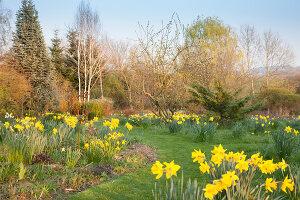 Bildno.: 12084105<br/><b>Feature: 12084103 - Shrubbery Deluxe</b><br/>Blooming garden in L&#246;hne, Germany<br />living4media / Pietrek, Sibylle