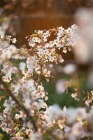 Bildno.: 12084107<br/><b>Feature: 12084103 - Shrubbery Deluxe</b><br/>Blooming garden in L&#246;hne, Germany<br />living4media / Pietrek, Sibylle