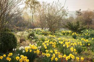 Bildno.: 12084117<br/><b>Feature: 12084103 - Shrubbery Deluxe</b><br/>Blooming garden in L&#246;hne, Germany<br />living4media / Pietrek, Sibylle