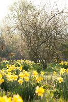 Bildno.: 12084119<br/><b>Feature: 12084103 - Shrubbery Deluxe</b><br/>Blooming garden in L&#246;hne, Germany<br />living4media / Pietrek, Sibylle