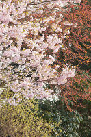 Bildno.: 12084121<br/><b>Feature: 12084103 - Shrubbery Deluxe</b><br/>Blooming garden in L&#246;hne, Germany<br />living4media / Pietrek, Sibylle