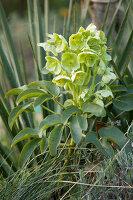 Bildno.: 12084123<br/><b>Feature: 12084103 - Shrubbery Deluxe</b><br/>Blooming garden in L&#246;hne, Germany<br />living4media / Pietrek, Sibylle