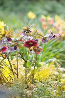 Bildno.: 12084125<br/><b>Feature: 12084103 - Shrubbery Deluxe</b><br/>Blooming garden in L&#246;hne, Germany<br />living4media / Pietrek, Sibylle