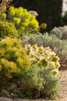 Bildno.: 12084127<br/><b>Feature: 12084103 - Shrubbery Deluxe</b><br/>Blooming garden in L&#246;hne, Germany<br />living4media / Pietrek, Sibylle