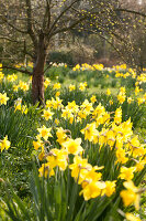 Bildno.: 12084129<br/><b>Feature: 12084103 - Shrubbery Deluxe</b><br/>Blooming garden in L&#246;hne, Germany<br />living4media / Pietrek, Sibylle