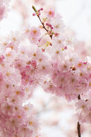 Bildno.: 12084131<br/><b>Feature: 12084103 - Shrubbery Deluxe</b><br/>Blooming garden in L&#246;hne, Germany<br />living4media / Pietrek, Sibylle