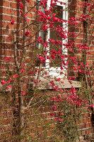 Bildno.: 12084133<br/><b>Feature: 12084103 - Shrubbery Deluxe</b><br/>Blooming garden in L&#246;hne, Germany<br />living4media / Pietrek, Sibylle