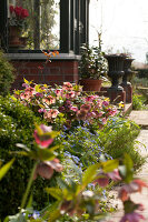 Bildno.: 12084135<br/><b>Feature: 12084103 - Shrubbery Deluxe</b><br/>Blooming garden in L&#246;hne, Germany<br />living4media / Pietrek, Sibylle