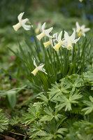 Bildno.: 12084137<br/><b>Feature: 12084103 - Shrubbery Deluxe</b><br/>Blooming garden in L&#246;hne, Germany<br />living4media / Pietrek, Sibylle