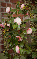 Bildno.: 12084139<br/><b>Feature: 12084103 - Shrubbery Deluxe</b><br/>Blooming garden in L&#246;hne, Germany<br />living4media / Pietrek, Sibylle