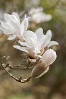 Bildno.: 12084143<br/><b>Feature: 12084103 - Shrubbery Deluxe</b><br/>Blooming garden in L&#246;hne, Germany<br />living4media / Pietrek, Sibylle