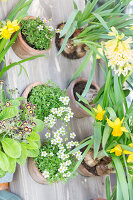 Immagine N°: 12100947<br/><b>Feature: 12100906 - A Place for Spring</b><br/>Covered area can provide a special place in the garden<br />living4media / Herwig, Modeste