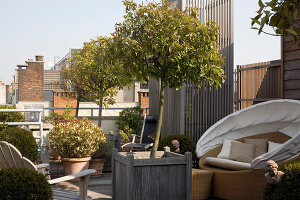 Bildno.: 12100973<br/><b>Feature: 12100951 - High Gardening</b><br/>Rooftop garden in Antwerp, Belgium<br />living4media / Obijn, Guy