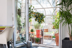 Bildno.: 12236425<br/><b>Feature: 12236411 - Under the Lemon Tree</b><br/>Gardening in a conservatory makes everything possible<br />living4media / Piru-Pictures