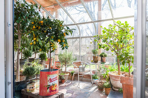 Bildno.: 12236427<br/><b>Feature: 12236411 - Under the Lemon Tree</b><br/>Gardening in a conservatory makes everything possible<br />living4media / Piru-Pictures