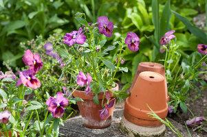 Bildno.: 12237161<br/><b>Feature: 12237139 - Bavarian Spring</b><br/>Allotment garden in Munich<br />living4media / Piru-Pictures