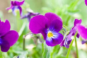 Bildno.: 12237169<br/><b>Feature: 12237139 - Bavarian Spring</b><br/>Allotment garden in Munich<br />living4media / Piru-Pictures