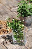Bildno.: 12242569<br/><b>Feature: 12242556 - Decorative Herbs</b><br/>How to use herbs as a decorative accessory<br />living4media / Raider, Peter