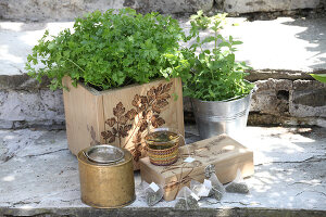 Bildno.: 12242573<br/><b>Feature: 12242556 - Decorative Herbs</b><br/>How to use herbs as a decorative accessory<br />living4media / Raider, Peter