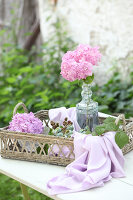 Bildno.: 12244633<br/><b>Feature: 12244598 - Hydrangea Hiatus</b><br/>Decorating with hydrangeas<br />living4media / Raider, Peter