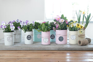 Bildno.: 12313237<br/><b>Feature: 12313229 - Tinned Pleasure</b><br/>Recycle food tins to create pastel coloured planters<br />living4media / Algermissen, Astrid