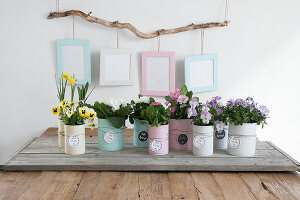 Bildno.: 12313245<br/><b>Feature: 12313229 - Tinned Pleasure</b><br/>Recycle food tins to create pastel coloured planters<br />living4media / Algermissen, Astrid