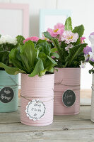 Bildno.: 12313247<br/><b>Feature: 12313229 - Tinned Pleasure</b><br/>Recycle food tins to create pastel coloured planters<br />living4media / Algermissen, Astrid