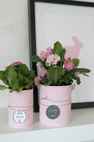 Bildno.: 12313253<br/><b>Feature: 12313229 - Tinned Pleasure</b><br/>Recycle food tins to create pastel coloured planters<br />living4media / Algermissen, Astrid