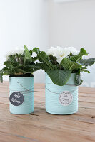 Bildno.: 12313257<br/><b>Feature: 12313229 - Tinned Pleasure</b><br/>Recycle food tins to create pastel coloured planters<br />living4media / Algermissen, Astrid