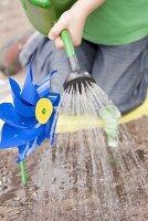 Child watering vegetable bed in garden