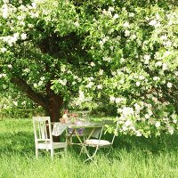 Set garden table below large, blossoming apple tree