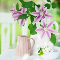 Vase of clematis flowers and bowl of apple blossom