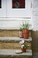 Flowerpots on steps to front door