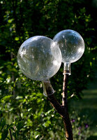 Two clear glass balls on forked branch