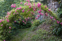 Large rose archway with pink, blooming roses
