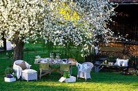 Set table in a garden under blooming fruit trees