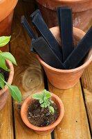 Plants, flowerpots and labels